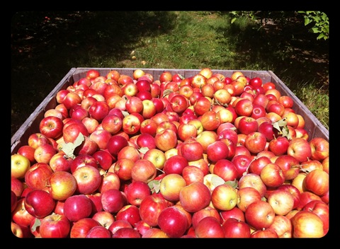 beasley's orchard danville indiana apples