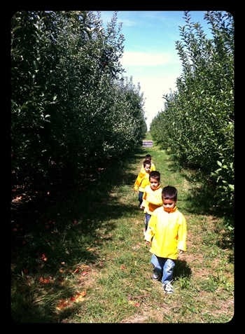 walking through the apple orchard