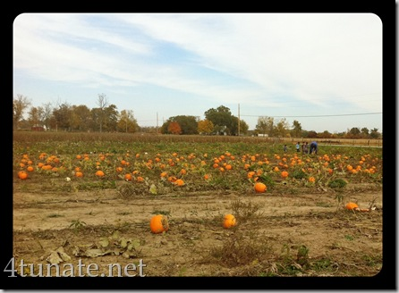 visiting pumpkin patch with kids picking pumpkins