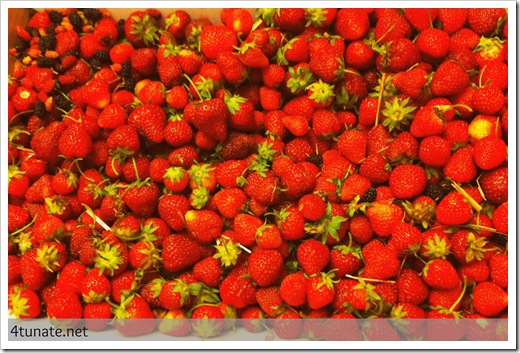 fresh picked strawberries by the pound indiana