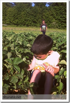 picking strawberries with kids at spencer farm noblesville