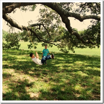 live oak wooden swing