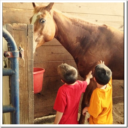 teaching kids about horse safety